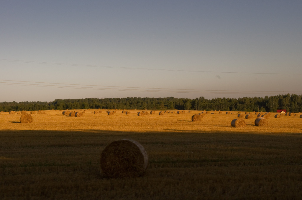 Eesti kuldsed väljad. Fields of Gold in Estonia.